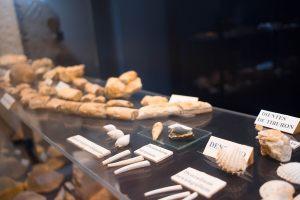 museo-arqueilogico-montoro-11