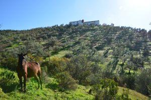 hotel-rural-olivetum-colina-23
